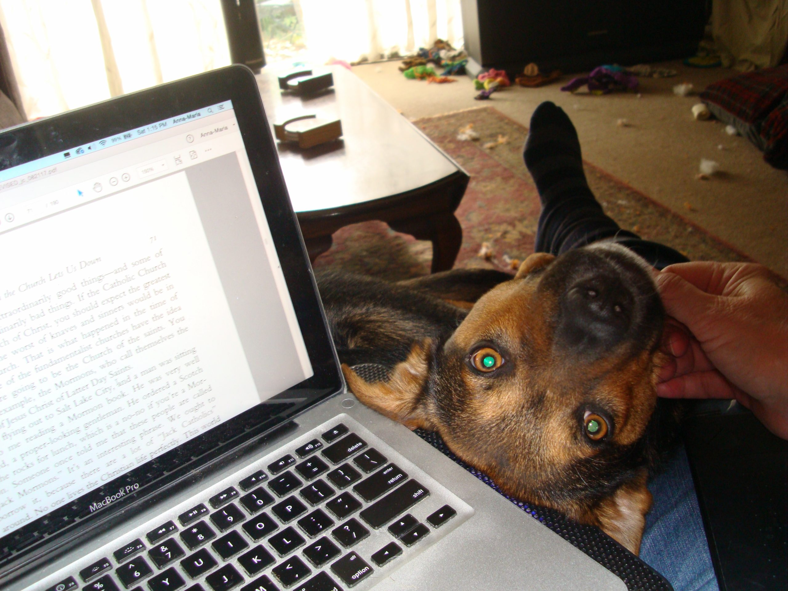 Tucker and laptop