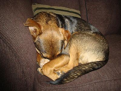 Tucker asleep